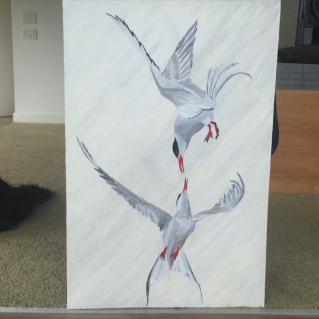 I got my stitches out this morning then painted this.  The bird is the Tern. Word. #ipaintbird #skatelite