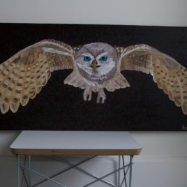 Owl – 1.29.17