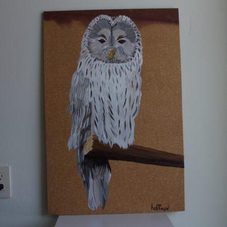 owlpirched2
